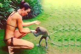 Monyet Sange Remas Toket Cewek Cantik